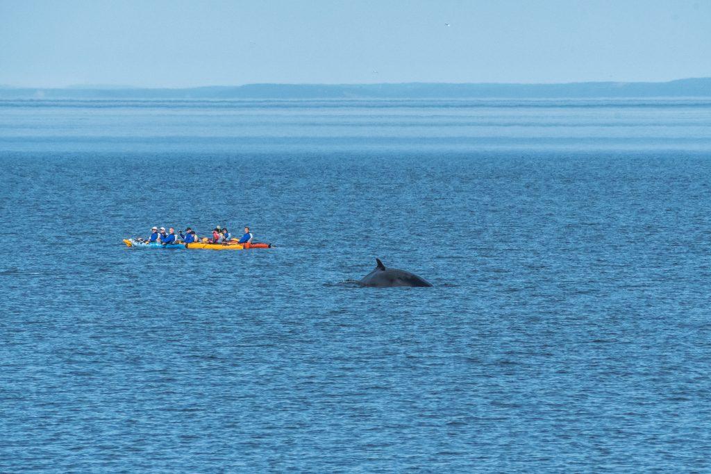 mer et monde kayak road trip Québec