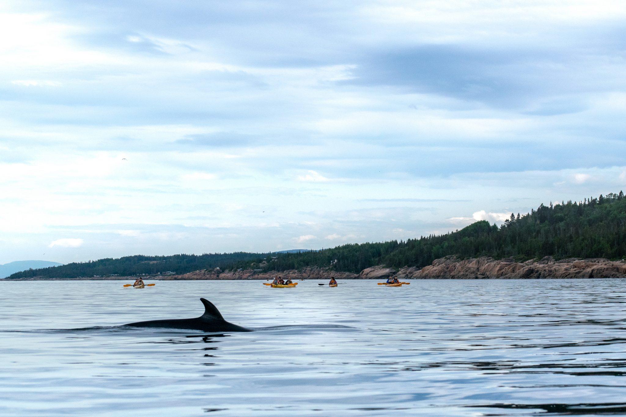 micro-aventures Québec baleine