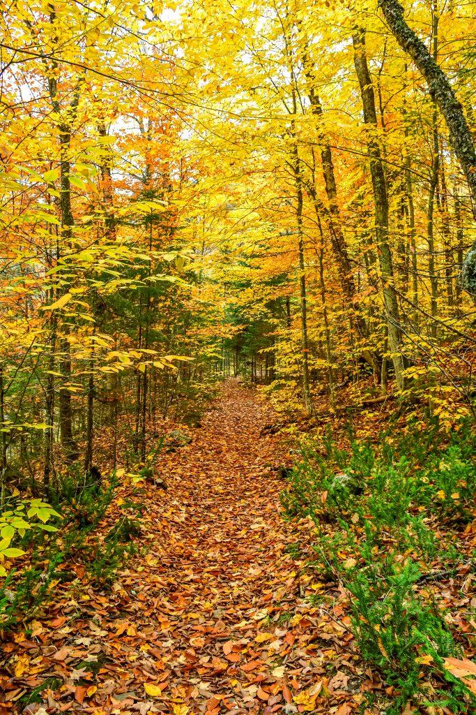 randonnée automne québec