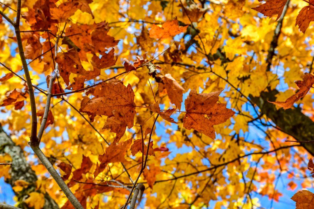 randonnée automne quebec