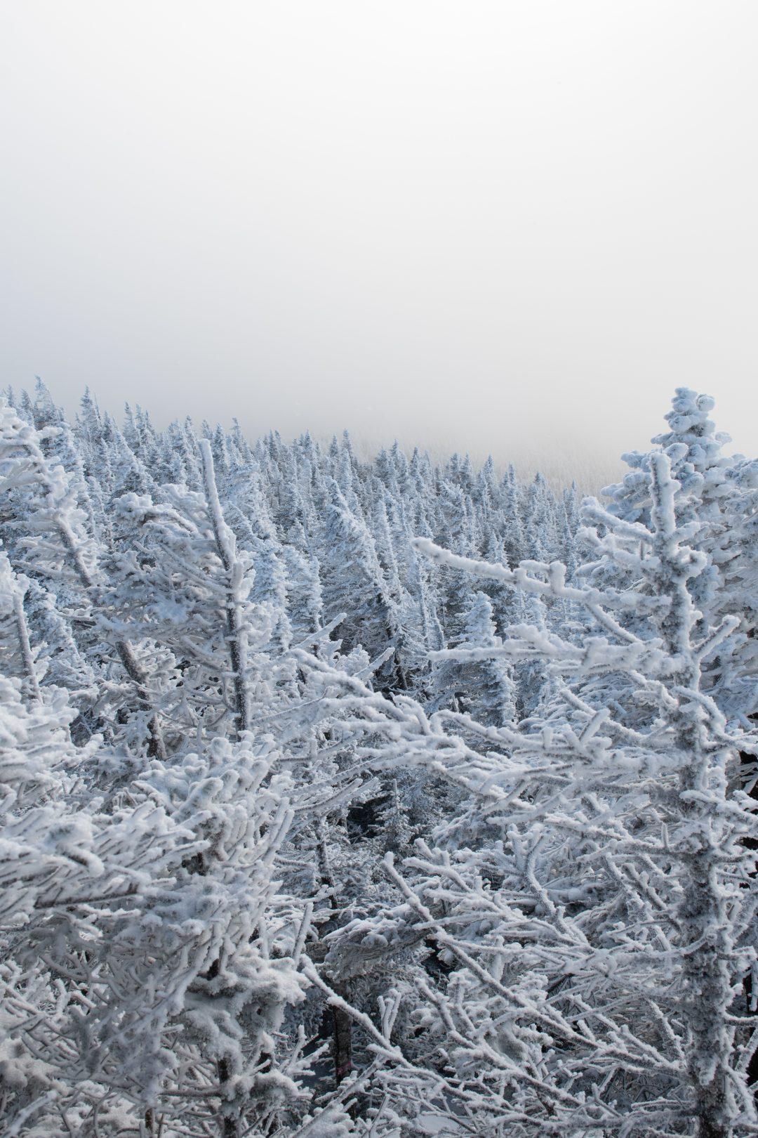 epinette sepaq neige