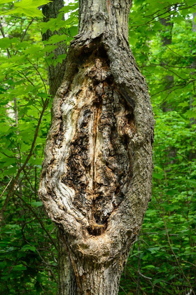 tronc arbre
