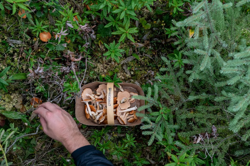 champignons foret