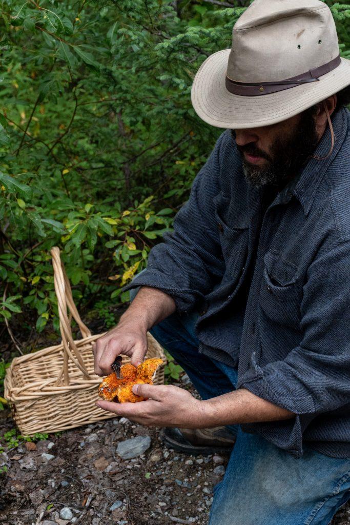 matagami champignon