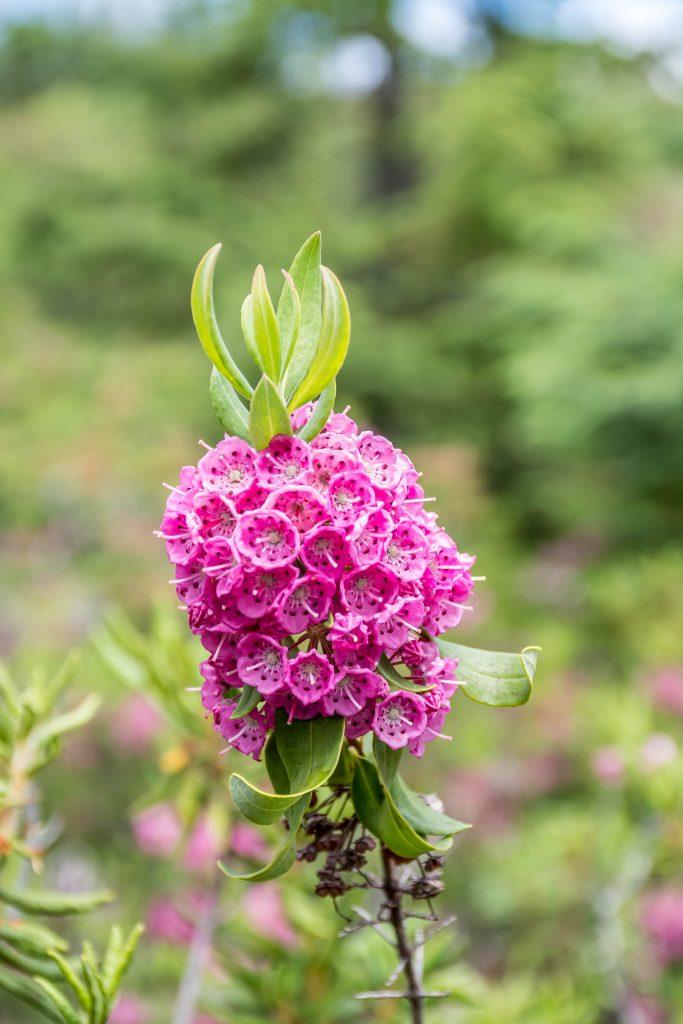 fleur grands jardins