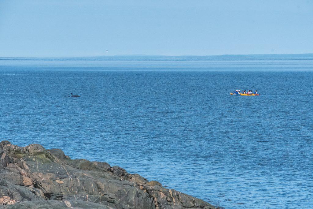 mer et monde kayak baleine
