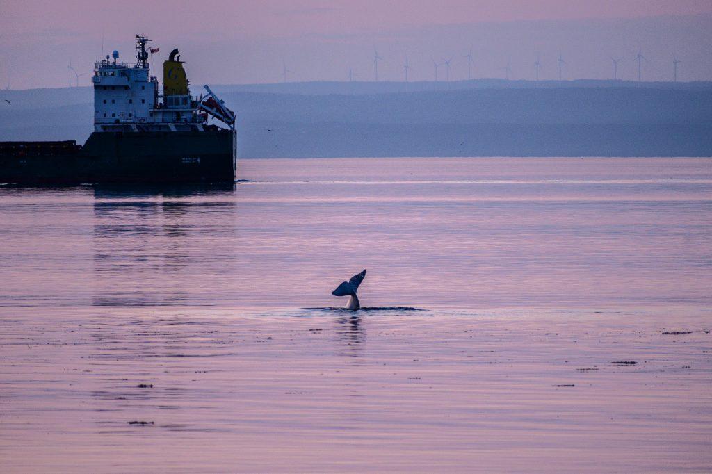 beluga mer et monde